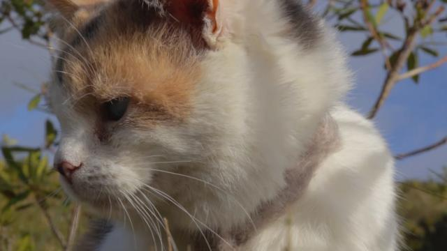 Watch Stevie the blind cat climb a mountain