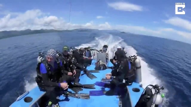 Divers Save Whale Sharks Trapped In Net