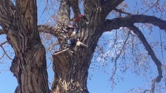 Four Year Old Girl Impressively Climbs Tree_Large