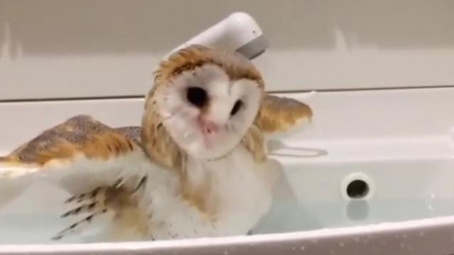 This cute owlet would like you to stop disturbing its bath