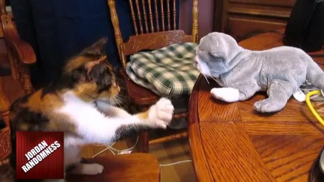 Kitty Displays Awesome Kung Fu