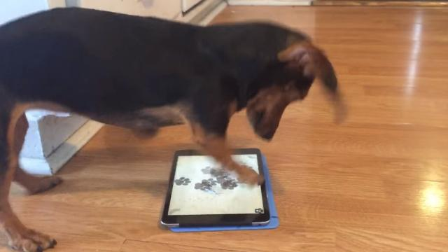 Dachshund playing her video game