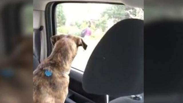 Sweet Dog Hates Watching Mom Drop Son Off At School, So She Makes