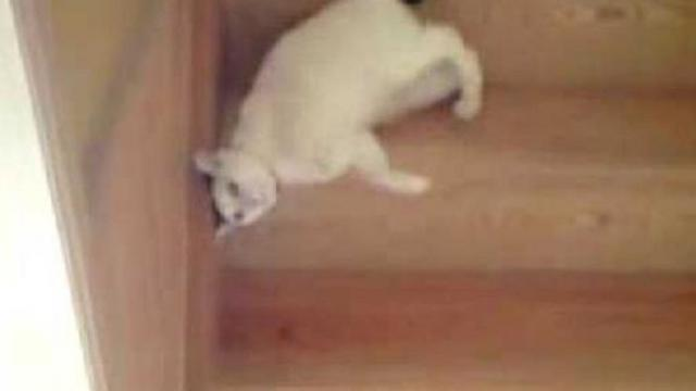 This Funny Cat Going Down the Stairs Proves That Cats Are in