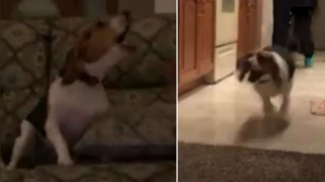 This dog won't stop barking at the door—but when they