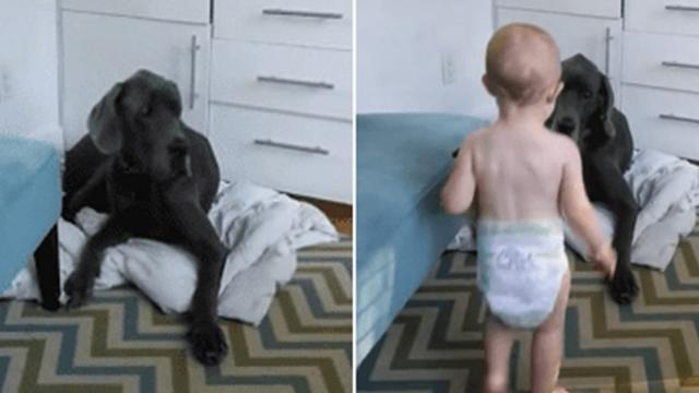 Toddler Orders Dog Out Of Bed, Dog Has Hilarious Response