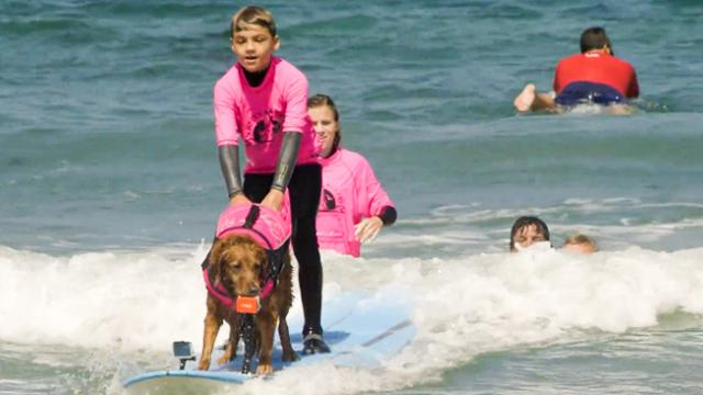 Surfer Dog Helps Autistic Boy Overcome Fear of Water