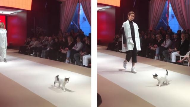 Adorable Cat Crashes Fashion Show — And Tries To Pick Fights With The Models