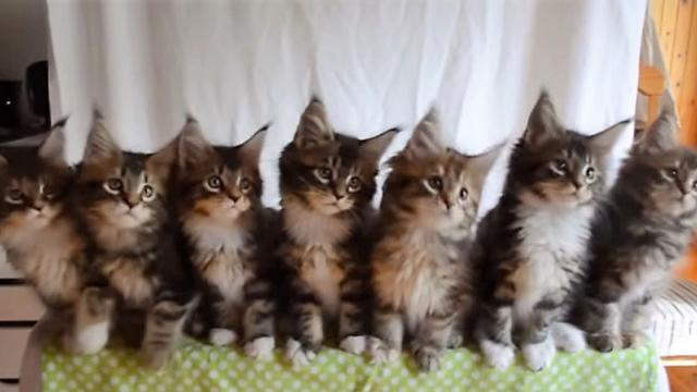 Kittens Dance In Sync To Uptown Funk—InspireMore