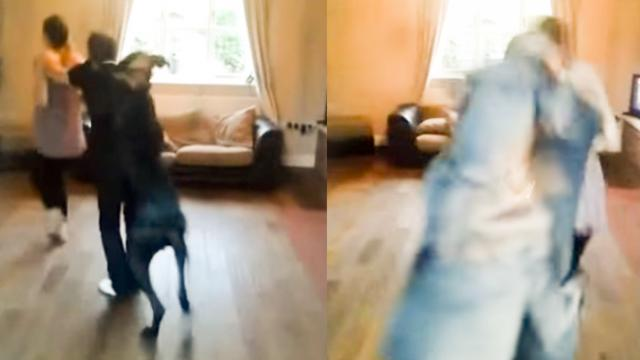 Great Dane Joins Conga Line With His Human Family