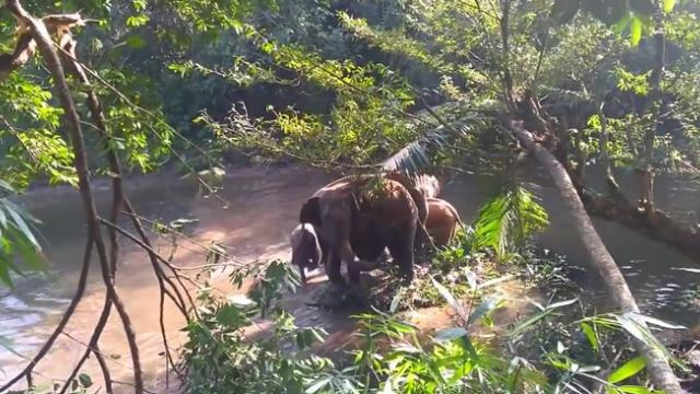 Elephant herd celebrates babys rescue from well in poignant moment