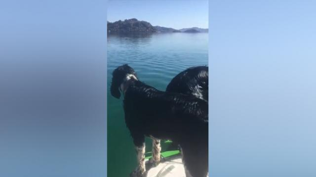 Curious Dogs React to a Whale Shark in Baja Concepcion