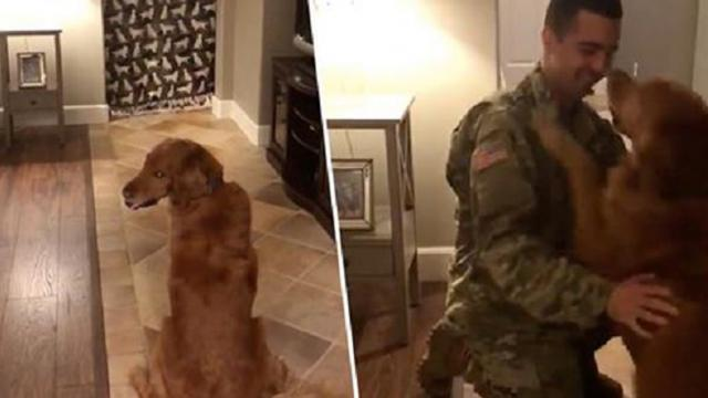 18 1 Dogs Reaction To Soldier Owner Returning Home Is