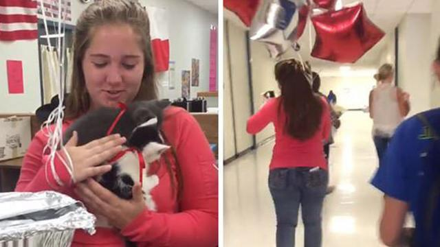 Teacher Lost Her 16-Year-Old Cat, So Her Students Surprised Her