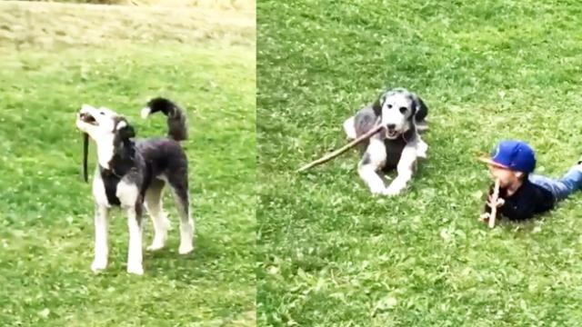 Branchin' Out—Kid Learns to Fetch Sticks in His Mouth With New Dog Friend