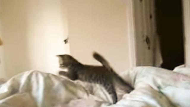 "Owner Plays A Wake-Up Game With Kitten That Will Make You Say ""Awwwww!"" - The Autism Site Blog"
