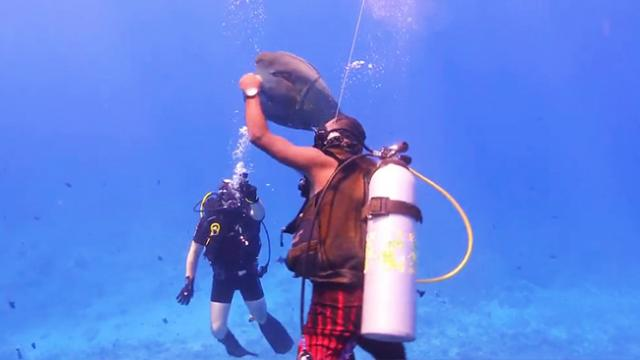 Hungry fish keeps demanding food from divers