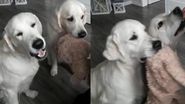 Dogs Adorably Share Toy And Treats In Video That Will Make You