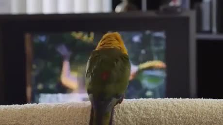 Parrot throws itself a little dance party