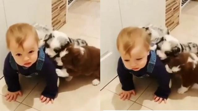 The baby get confused when the dog licking his ear!