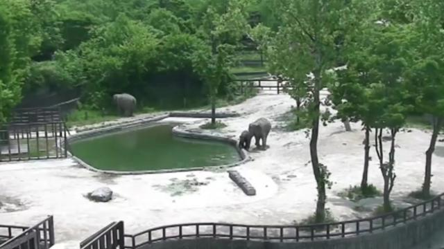Quick-thinking elephants save the day