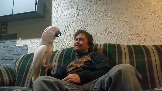 Dad Asks His Cockatoo If She Loves Him. The Bird's Response Made Me Burst Out Laughing!