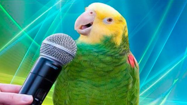 The Best Round Of Bird Singing I've Ever Seen!