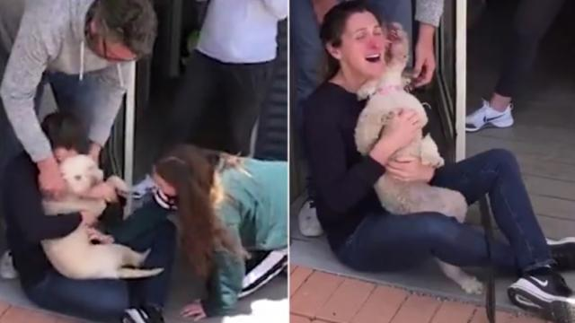 Welcome home Pippy. The emotional moment a dog stolen outside a supermarket by a brazen thief is reu