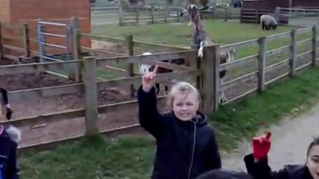 Talented Goat Waves Goodbye