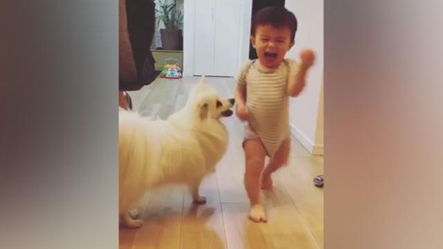 Dog And Baby Take Turns Playing Fetch