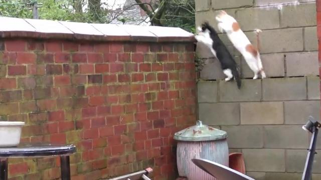 Funny Cats Jump at the Same Time in Super Sinh