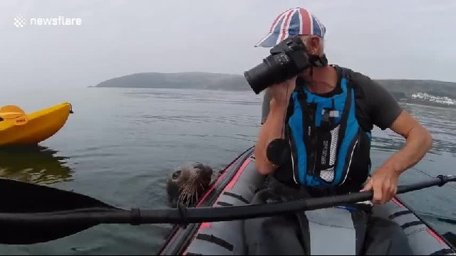 Friendly seal tries to get into man's kayak