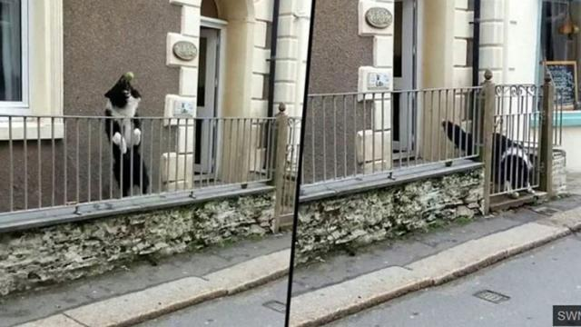 Dog Always Wants To Play Catch When People Walk Past His Gate