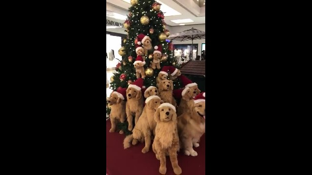 Christmas Tree Full of Doggos -- ViralHog