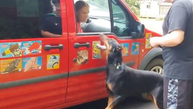 Doberman Love Ice Cream Truck, Shows Off Tricks For Popsicle