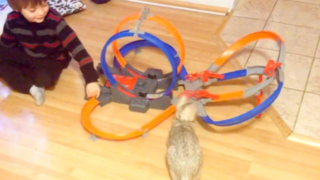 Sneaky Cat Steals Boy's Toy Car Straight Off Racetrack