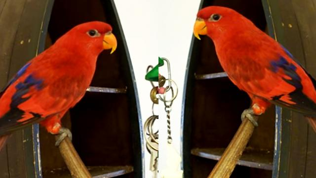 Sparky the Smartest Talking Red Lory Bird In The World, offers you a beer!!!