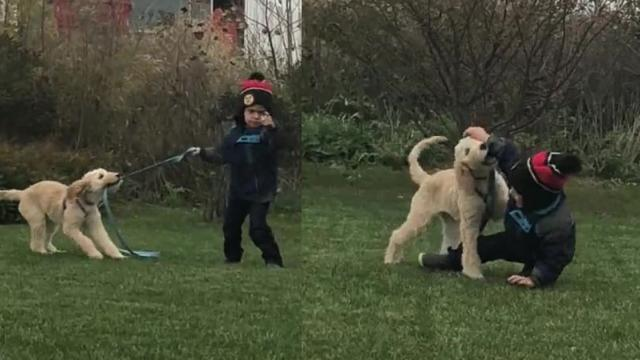 Adorably toddler hilariously struggles to walk dog on leash_Large