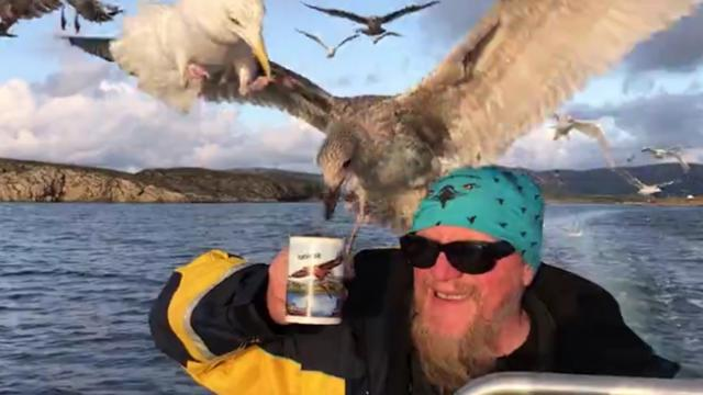 It's a tea-gull! Photographer snaps moment seagulls swarm captain for his classic cup of tea