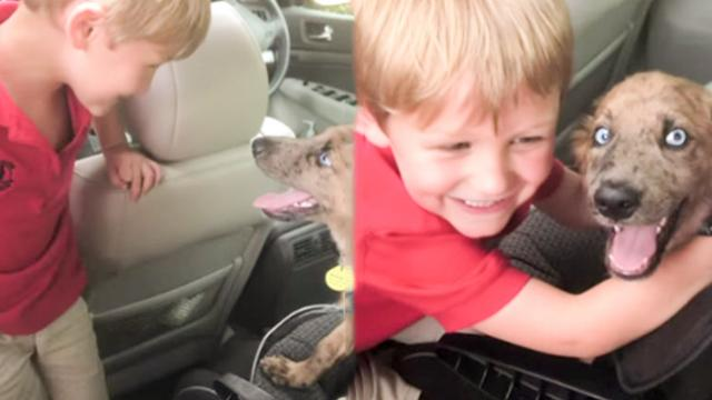 Little Boy Gets Puppy, They Instantly Become Best Friends (2)