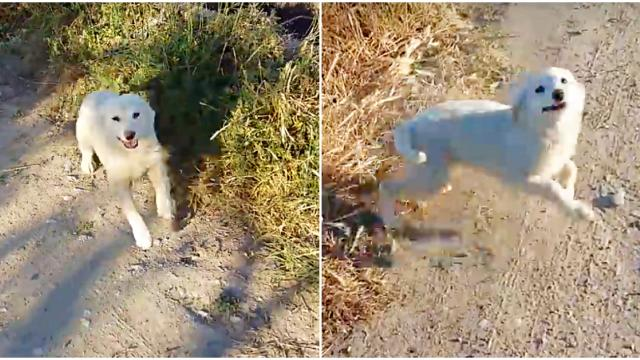 Homeless Puppy Is Overcome With Joy When A Jogger Approaches Him On The Street