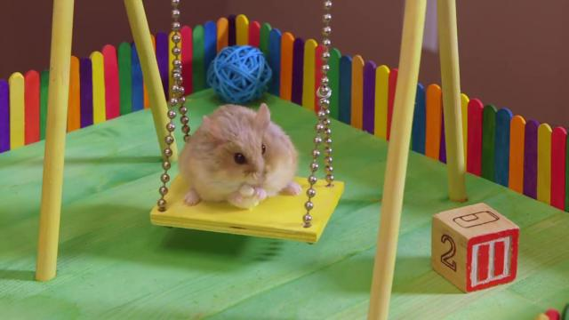 Two Hamsters in a Tiny Playground