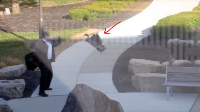 Angry Goose Attacks Man In Park Their Ensuing Epic Battle Has The Internet Rolling With Laughter