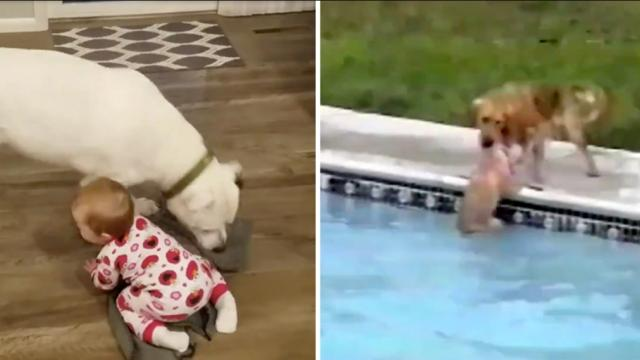 Helpful dog lends a paw by covering baby with blanket—but