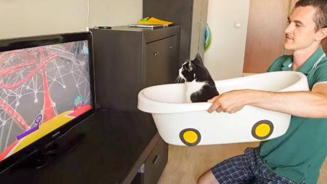 Watch this cat ride a virtual roller coaster at home! - The Meow Post Daily Cat Blog
