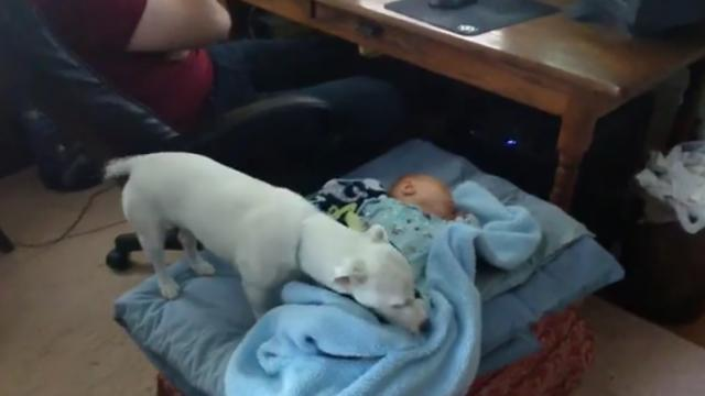 Parental Pup Perfectly Swaddles Newborn Baby