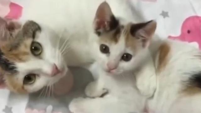Cat Mom Rescued Along with Her Surviving Kitten - She Wouldn't Let Her Go