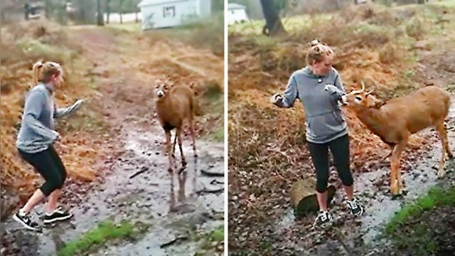 Girls encounter a buck in the woods—when he tries to get a