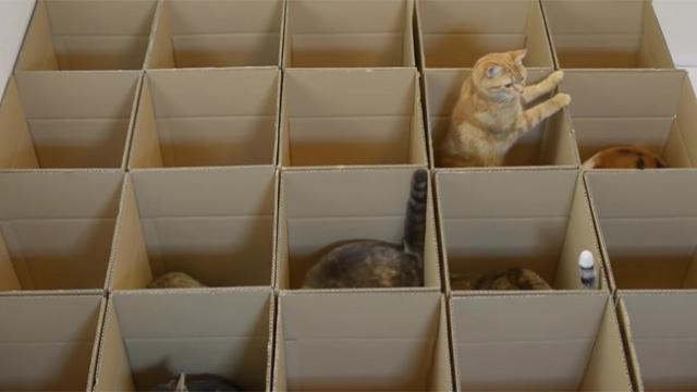 These Cats Are Going Crazy For Cardboard Maze Made By Their Human Servant