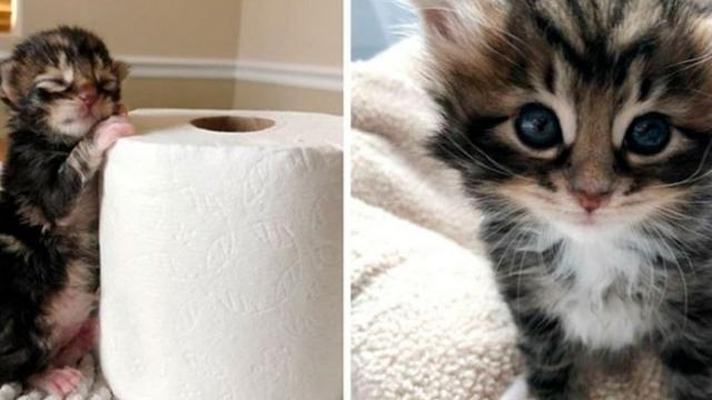 Kitten Found Abandoned in a Bush Just Hours Old, Has Her Life